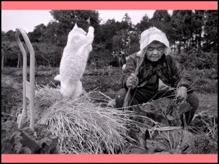 Японская бабушка с котом