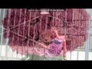 «Я» под музыку Масяня - Песня про Диану(блондинку) и Катю( в платочке) =**. Picrolla