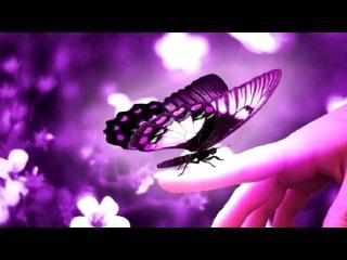 «Бабочки» под музыку Глюкоза - Бабочки в моём животе♥ ♥ ♥ . Picrolla