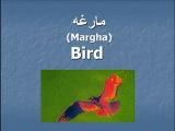 ▶ Pashto- Animals Part 1 - Животные часть 1