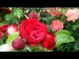 «В гостях у Сказки)))» Сад Веры Ляджиной.И на болоте растут розы.под музыку Мирей Матье [vkhp.net] - ФРАНЦУЗСКИЙ (СВАДЕБНЫЙ) ВАЛ