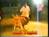 собачьи бои булли кутта алабай