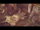 Странное дело №69. 'Гибель империй' (25.01.2013)