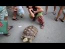 покатай меня большая черепаха)