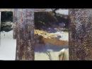 Colley Whisson Sunlit Sands Of Stradbroke