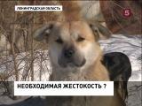 Мужчина застрелил собак, которые чуть не загрызли его дочь, зоозащитники хотят отправить его за решетку
