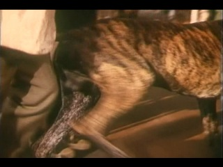 Дача (1973). На выставке собак