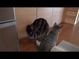 И немного про котиков