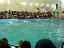 Люди и дельфины. Одесский дельфинарий.