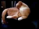 САМЫЕ смешные животные Смешные кошки Видео приколы про животных