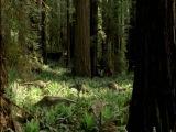 BBC: Прогулки с динозаврами (озв. Н. Дроздов) 2-я серия