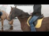 «Лошадки» под музыку мультики - Песенка про лошадей. Picrolla