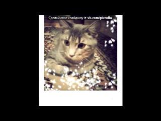 «Наши котики - 4» под музыку Приколы - Дед Мазай и зайцы. Picrolla