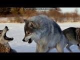 «Красивые Фото • fotiko.ru» под музыку Шансон - Одинокий волк. Picrolla