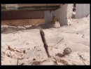 """Отель. Миссия невыполнима. Сезон 3, серия 9. Операция """"Сэнди"""" Часть 1"""