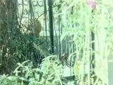 Yerlisinemaizle.com Kiralık Ev - Türk Filmi izle