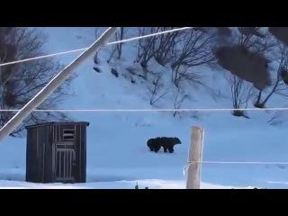 Бабушка прогнала медведей
