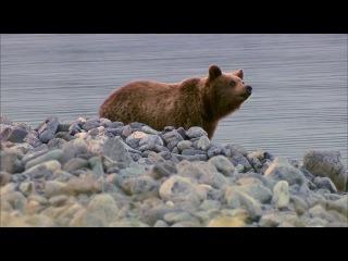 Дикая природа России. Экспедиции в животном мире (Wildes Russland. Expeditionen ins Tierreich) - Сибирь (Sibirien)