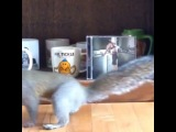 Mr. Tickle, Ms.Grey, and Mr. Nuts. Video courtesy of @corygrove cobradogs