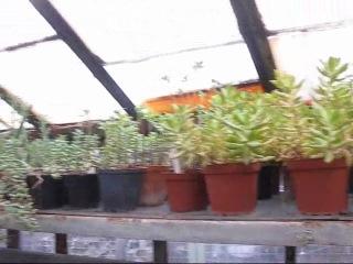 Наш фильм про ботанический сад на немецком языке :)