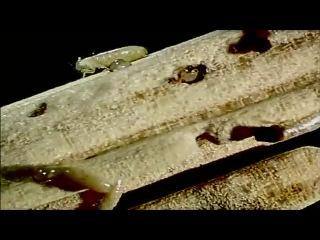 Будущее планеты: Жизнь после людей / Life After People (2008 г. документальный фильм, США)