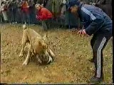 Собачьи бой Рембо - Анчар шахты