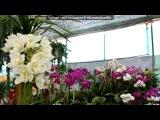 Сад цветов в Далате под музыку Вьетнамская музыка - Ding don 12. Picrolla