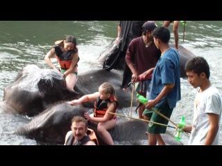 Как мы купались со слонами