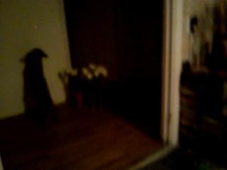 Хучику понравился лазер:))