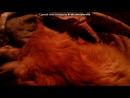 «Альфонс Доде» под музыку Песенка про кота=) - Киц киц киц кица, кица кицуня мур мур мур мурка, мурка манюуууууууууууууня. Picrolla