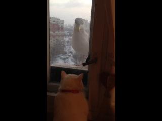 Битва отважной кошки и свирепой птицы с большим клювом!