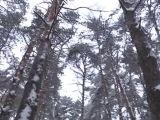 Мораторий на вырубку - РЕН ТВ Новости 24