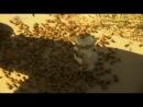 6 of 8 - / Сверхлюди Стэна Ли Человек Краш-тест / Stan Lees Superhumans Human Crash Test Dummy/ 2010 Discovery