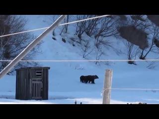 Медведи пришли в деревню