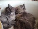 Двое маленьких котят ищут семью и дом! Срочно!