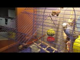 Попугай разговаривает с котом (часть 2)