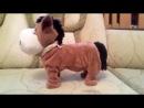 лошадка прикольно танцует.