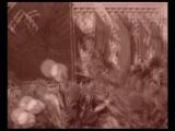 Юрий (Хой) Клинских - Сектор Газа - Туман . (Mini restoration).