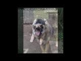 «мои котики и собачки» под музыку ❥Грустная песня ... Дослушайте - Про собаку !. Picrolla