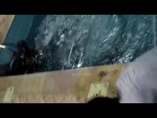 ахахаха. Толстый негр хотел нырнуть со стула в бассейн, но не получилось(( стул сломался под ним и жирное тело рухнуло на пол и скатилось в воду. Ребятам за кадрам страшно смешно