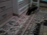 наша кошка Шуня