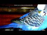приколы про моих попугаев