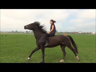 Галоп в поле на свободной лошади