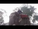 По улице слона водили