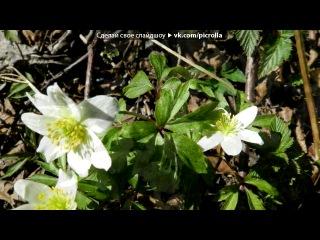 «Весна на даче год2013 месяц май день 9-ый.» под музыку Джо Дассен - Если б не было тебя. Picrolla