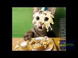 Поздраление с днём рождения от кота ! Поздравляйте всех )