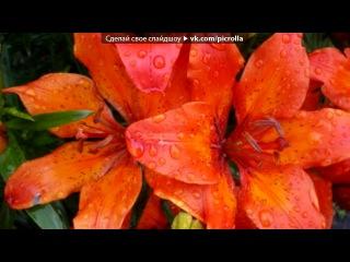 «На даче.....В огороде :)» под музыку группа Весна - Не простая любовь. Picrolla