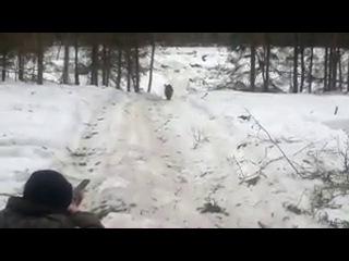 горе-охотники на кабанов