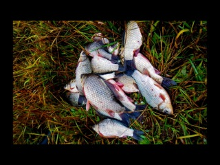 Рыбачим зимой и летом