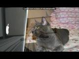 My Pet + под музыку